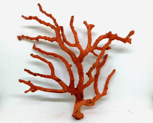 corallo rosso del mediterraneo